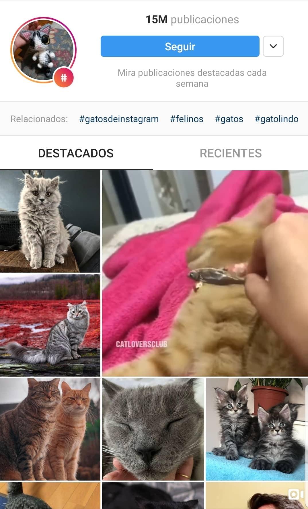 Mejores-Hashtags-Instagram-gatos