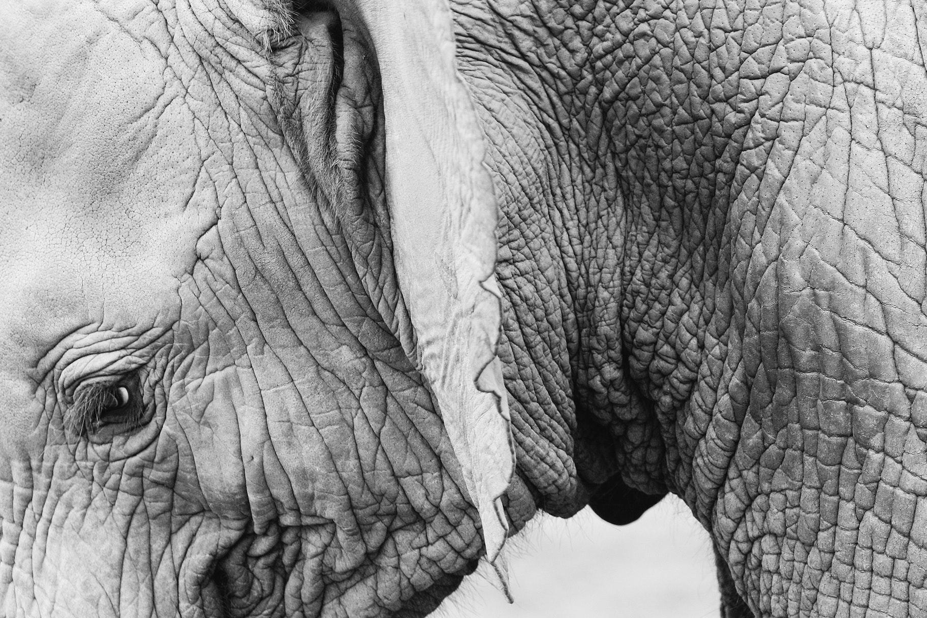 Images gratuites éléphant