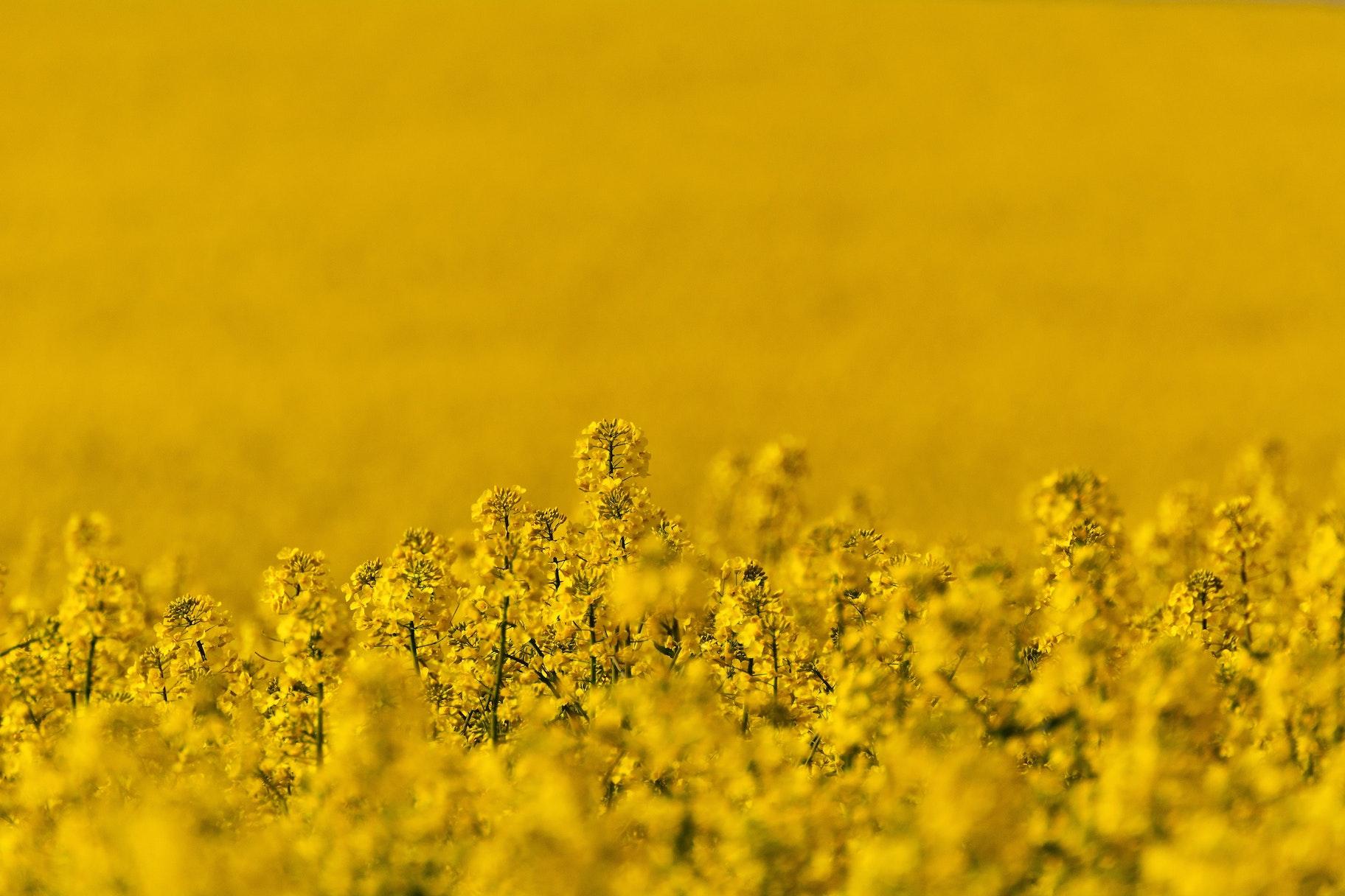 Images gratuites fleurs