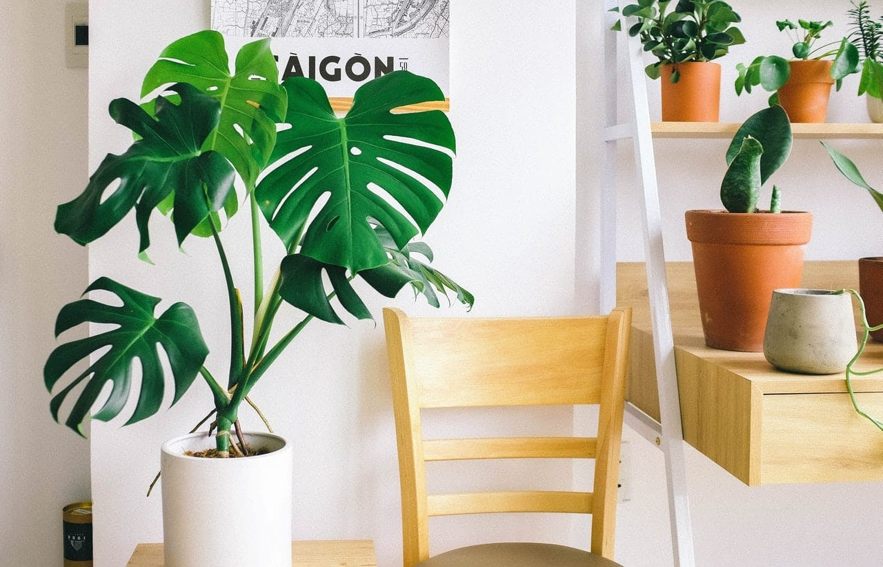 adding plants is an easy home office idea