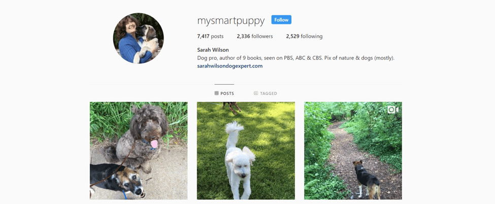instagram dogs