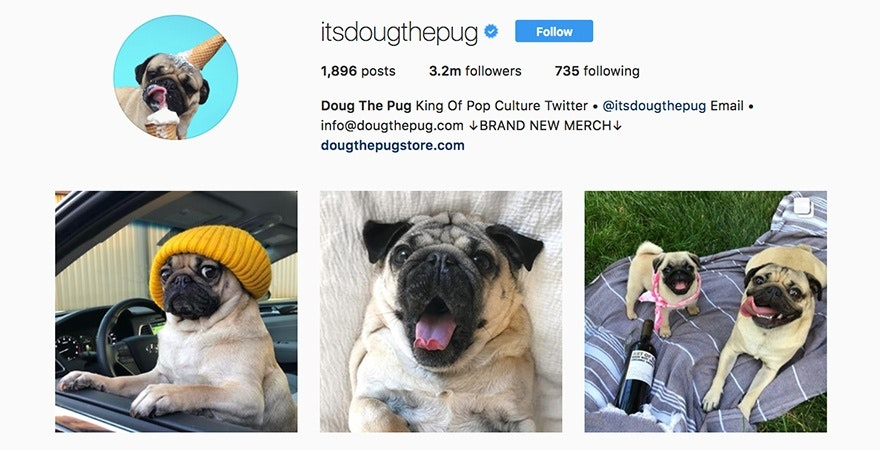 Doug The Pug - Personal Brand Examples