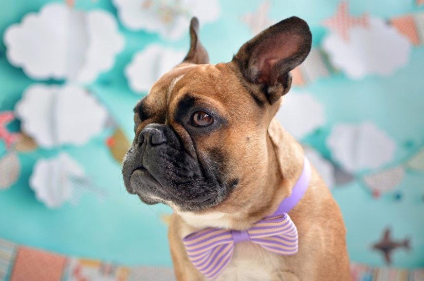 Mãe empreendedora: ideia de negócios no nicho de pets