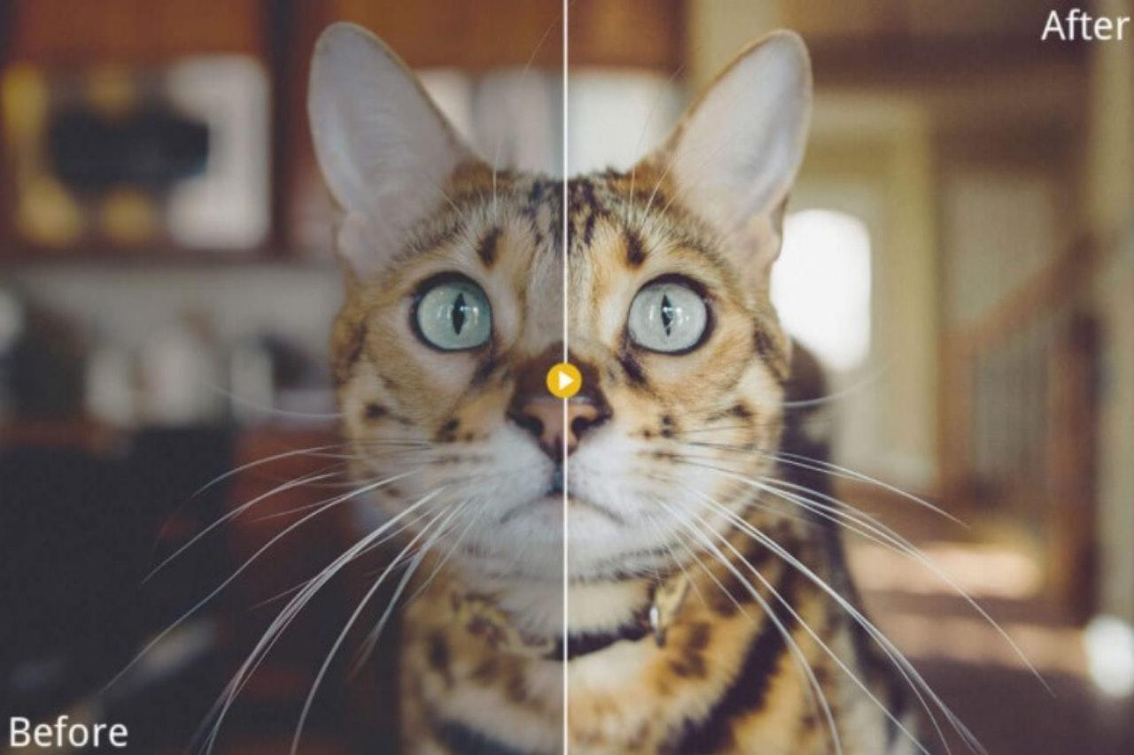Pet Photography Presets: presets gratuitos
