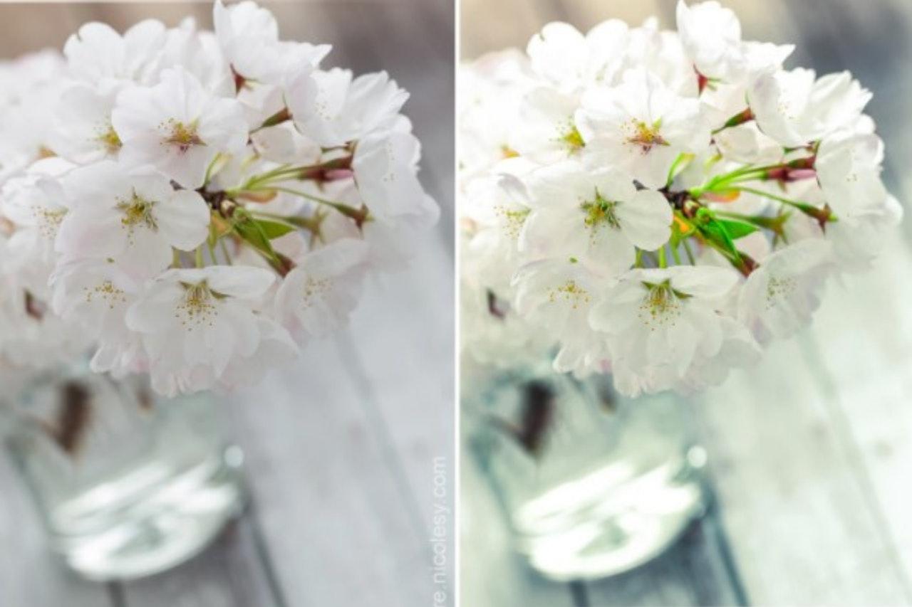 Flor de cerejeira: presets gratuitos