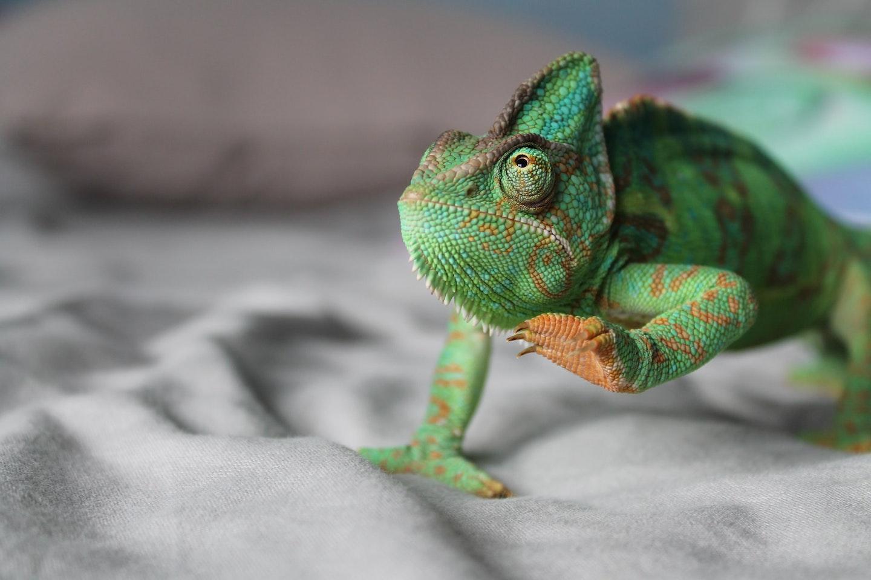 trasformazione digitale: un'azienda camaleontica